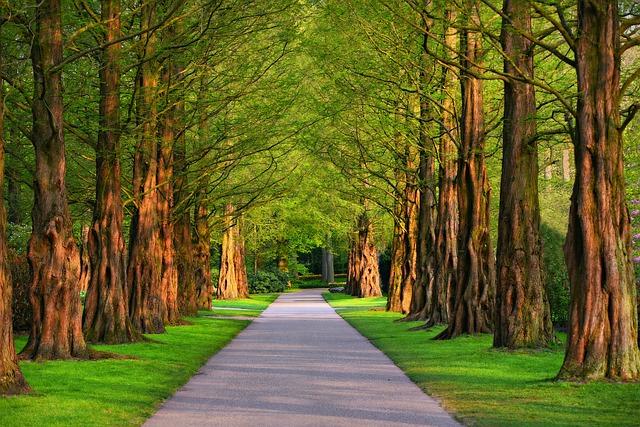 stromy lemovaná cesta