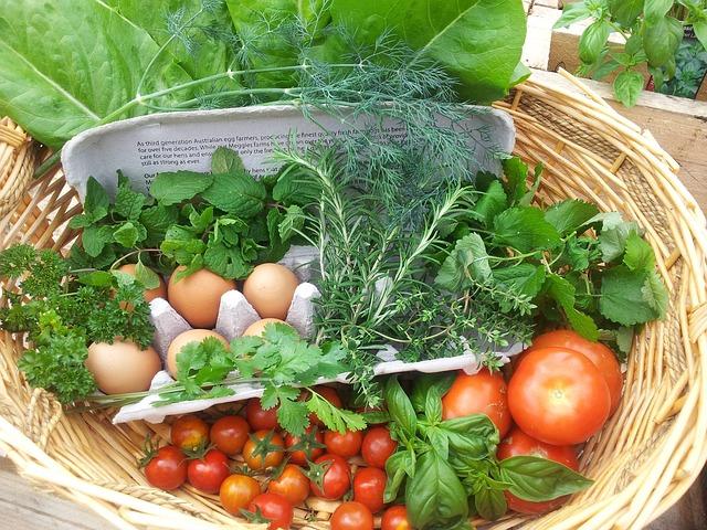 sklizeň zeleniny a vejce